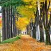 [날씨] 오늘 '상강' 요란한 가을비···안개·미세먼지 '주의'