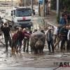 조지아 대홍수에 사자·호랑이 등 동물원 탈출 '비상'···10명 사망, 맹수 공격은 미확인