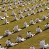 제1회 요가의 날, 모디 총리 등 인도서만 3만5천명 행사···미국 회원 2천만 연 11조 매출