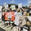짐바브웨 마스코트 사자 '세실', 잔혹한 죽음···유엔 '밀렵은 범죄' 결의안 채택