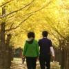 """[오늘의 시] '나의 반야심경' 홍사성 """"가을, 양평 용문사 절 앞 늙은 은행나무"""""""