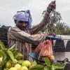 [포토 세계여행] 인도여행, '쉬라바스티'의 '기원정사'