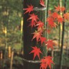 """[오늘의 시] '상강' 이상국 """"생각이 아궁이 같은 저녁···어느새 가을이 기울어서"""""""