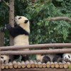 [중국 양회兩會 특집] 中 '자연보호구' 국토의 15%···환경보전에 '총력전'