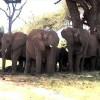 [김창수 시인의 뜨락] 차옥혜 '성난 코끼리 모자'···저들의 초원을 빼앗은 자 누구?