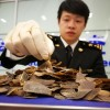 [중국 양회兩會 특집] '야생동물보호법 위반' 최고 10년 징역형