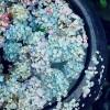 [5월의 시와 사진] 꽃잎들 장독대에 살포시 내려앉다