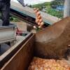 [살충제 계란 파동] 피프로닐 검출 남양주 농장 달걀 323만개 먹어야 '사망'