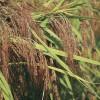 한국의 토종작물 중 가장 많은 것은?