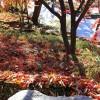 """[오늘의 시] '추일서정' 김광균 """"낙엽은 폴란드 망명 정부의 지폐"""""""