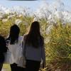 [오늘날씨] 단풍도 억새풀도 절정····한강둔치서 독서삼매를