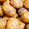 [GMO 왜 위험한가②] 유전자변형 감자 식탁위협···'GMO 완전표시제' 공약 실종