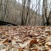 [12.20 날씨·명언] 초미세먼지 '나쁨'···도로 뒹구는 낙엽은 '아, 가을이여'