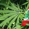 [아시아 10대뉴스-레바논] '대마초 합법화 검토'·'석유·가스 개발 면허승인'