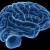 中 사상 최고성능 두뇌 스캐너 개발 착수