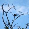 """[오늘의 시] '나무와 새' 동시영 """"흔들리는 동안 나무가 행복했을까 새가 행복했을까"""""""