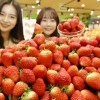 """유명 산지에서 수확한 신선한 딸기 """"롯데마트-에서 설향 딸기 사세요"""""""