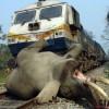 인도서 코끼리, 열차와 충돌해 사망