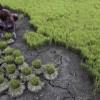 """불합리한 인도 '식량안전법'···""""공자 가르침 새기길"""""""