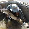 투르크메니스탄, 철갑상어 양식 프로그램 가동