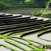 <Asia Briefing> 발리의 계단식 논농사 '수박'···유네스코 문화유산
