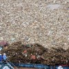 여름이면 쓰레기 몸살앓는 양쯔강