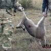 호주는 '캥거루 사냥 중'