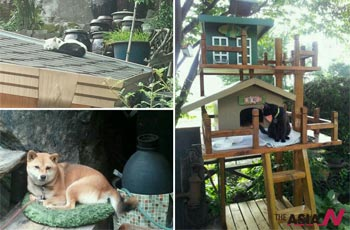 삼청동 지붕위 고양이와 로마의 까미, 그리고···