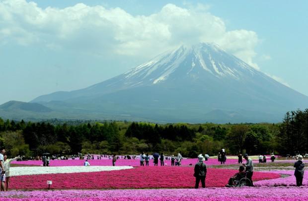 화사한 꽃밭과 숲 너머로 후지산이 웅장한 자태를 드러내고 있다. 일본은 문명과 자연의 공존을 이룩했다.
