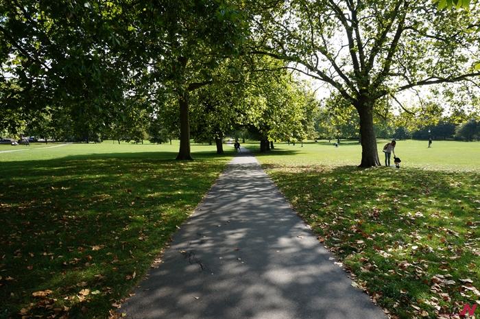 공원에 드리워진 커다란 나무 그림자들