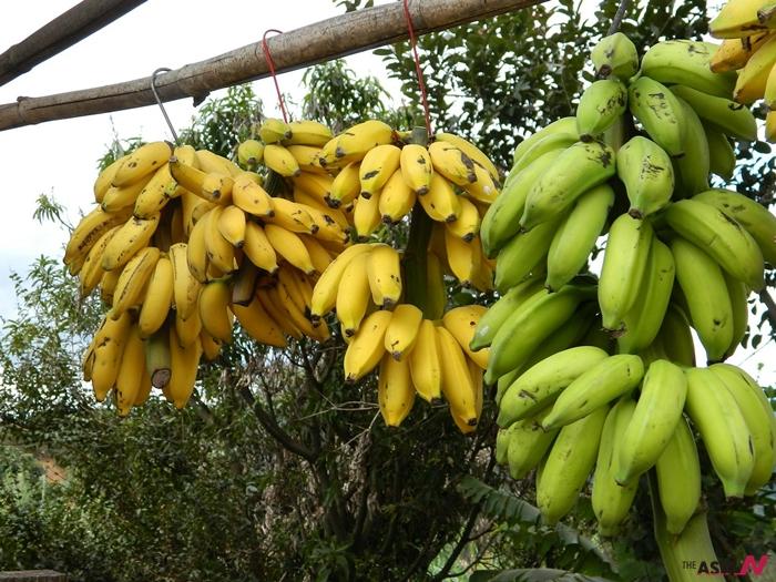 123bunch-of-bananas-101594_1280_960