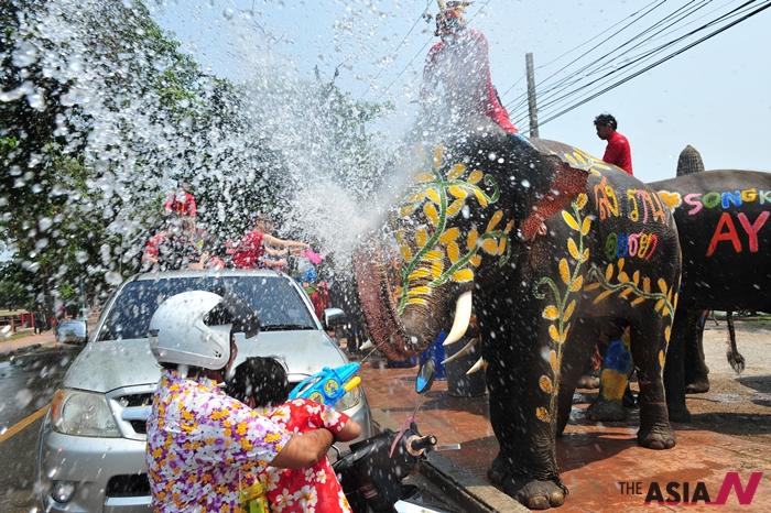 태국 물축제 '송크란' 기간에는 코끼리가 직접 사람들에 물을 뿌려대는 광경도 볼 수 있다.