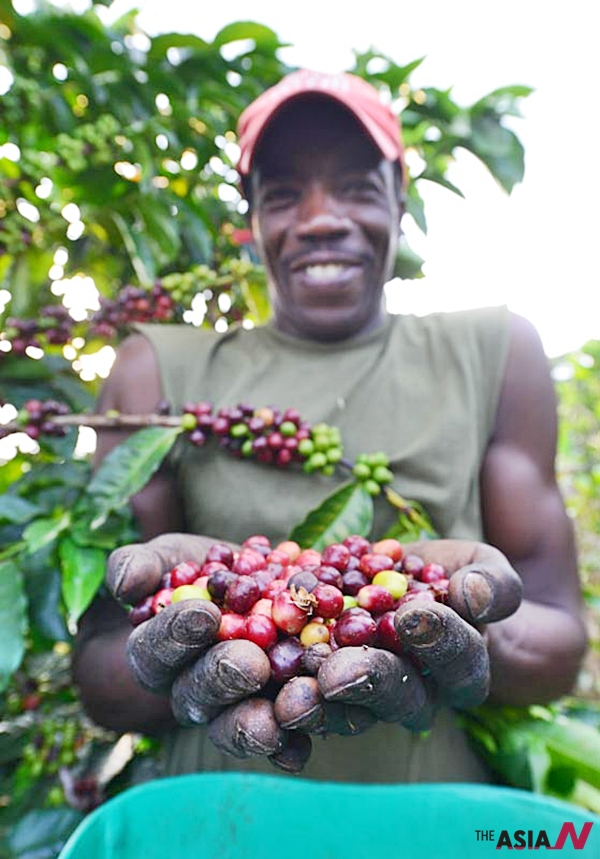 콜롬비아 명품 커피산지인 안티오키아 해발 1800m인 커피농장에서 열매를 수확하는 재배자의 얼굴에는 고단함보다 행복감이 넘쳐난다.